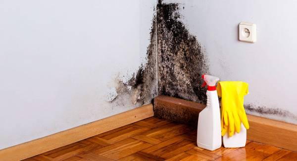 Jak pozbyć się pleśni w mieszkaniu