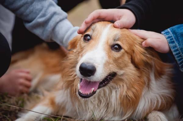 Rasy najmilszych psów